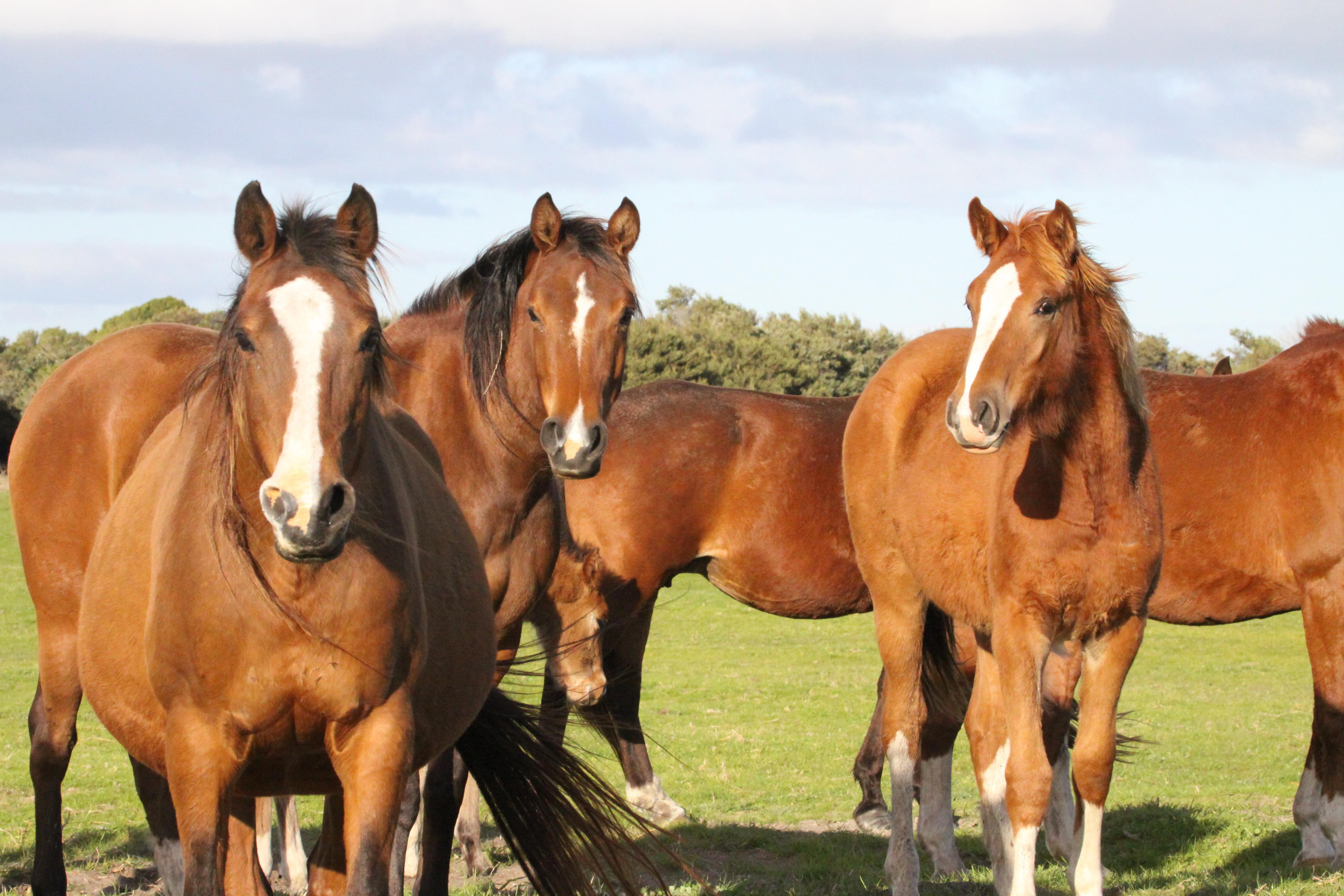 Mundoo Horses (42)
