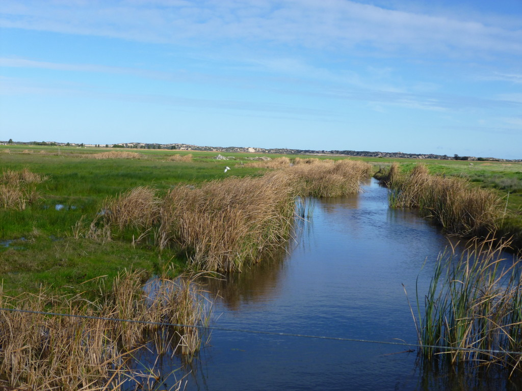 Mundoo Wetlands (4)