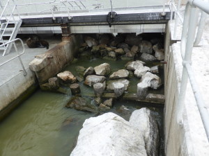 Fishway in the Tauwitcherie Barrage